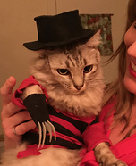 A Nightmeow on Elm Street Homemade Costume