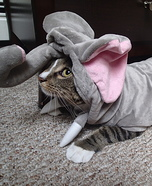 Homemade Elephant Costume for Cats