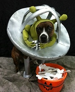 Creative costume ideas for dogs: Alien flying his Ship Halloween Costume