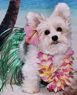 Aloha Dog Homemade Costume