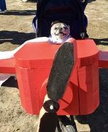 Amelia Earhart Dog Halloween Costume