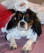 Angel and the Devil Costumes for Dogs