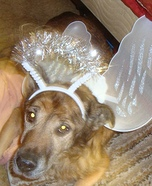 Angel Dog Homemade Costume