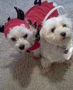 Angel & Devil Costumes for Dogs
