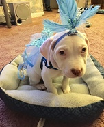 Angelic Dog Homemade Costume