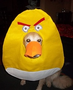 Angry Bird Dog Homemade Costume