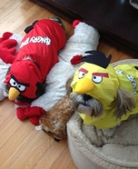 Angry Birds Costumes for Dogs