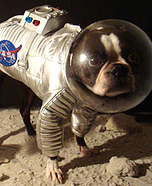 Creative costume ideas for dogs: Astronaut costume for dog