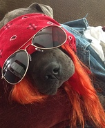 Axl Rose Dog Homemade Costume