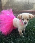 Ballerina Puppy Homemade Costume
