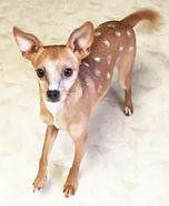 Bambi Dog Homemade Costume
