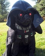 Creative costume ideas for dogs: Darth Vader Costume