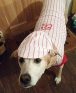 Baseball Player Dog Homemade Costume