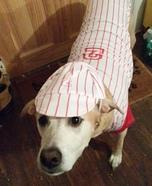 Baseball Player Dog Homemade Costume