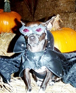 Batdog Homemade Costume