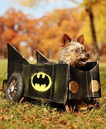 Creative costume ideas for dogs: Batman in Batmobile Dog Costume