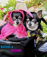 Batman & Batgirl Dog Costumes