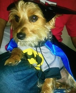 BatMax Dog Homemade Costume