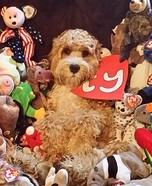 Beanie Baby Dog Homemade Costume
