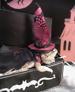 Lizard dressed as Witch