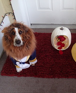 Beauty and the Beast Dogs Homemade Costume