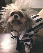 Beetlejuice Dog Costume DIY