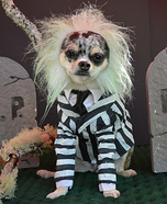Beetlejuice Dog Homemade Costume