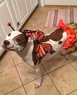 Bella Butterfly Homemade Costume