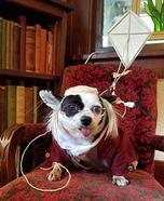 Ben Franklin Dog Homemade Costume