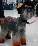 Bewitching Dog Costume