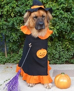 Dog Witch Costume