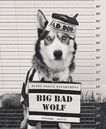 Big Bad Wolf Dog Homemade Costume