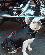 Biker Frenchie Girl Homemade Costume