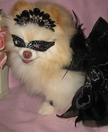 Creative costume ideas for dogs: Black Swan Dog Costume