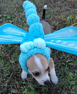 Creative costume ideas for dogs: Blue Dasher Dragonfly Halloween Costume