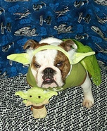 Bulldog Yoda Homemade Costume