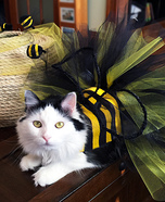 Bumble Bee Cat Costume