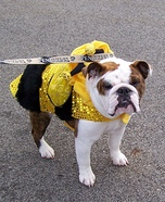 Bumblebee Dog Homemade Costume