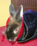 Bunnicula the Vampire Bunny