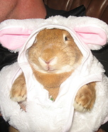Bunny Bunny Homemade Costume