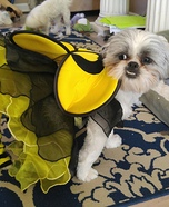 Busy Bee Dog Homemade Costume