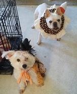 Candy Corn and Cute Witch Pups Homemade Costume