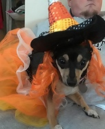 Candy Corn Witch Dog Homemade Costume