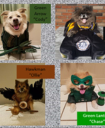 Canine Justice League Homemade Costume