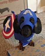 Captain America Dog Homemade Costume