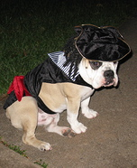 Dog Captain Jack Sparrow Costume