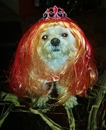 Carrie White Dog Homemade Costume