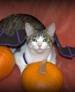 Cat Bat Homemade Costume
