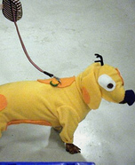 Creative costume ideas for dogs: CatDog Costume
