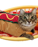CatDog Cat Homemade Costume